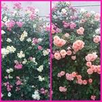 PhotoGrid_1431853590096.jpg
