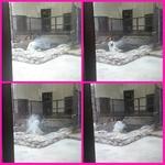 PhotoGrid_1436736030926.jpg