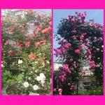 PhotoGrid_1431853637104.jpg