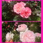 PhotoGrid_1431853699469.jpg
